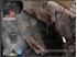 Picture of Emerson Gear Assault Back Panel (Multicam Black)
